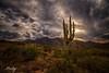 Apache Trail, Superstition Mountains, Arizona (concho cowboy) Tags: wow fabulous