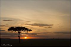 A New Dawn! (MAC's Wild Pixels) Tags: sunrise savannahplains goldenlight goldenhour magicalsunrise africansunrise wildafrica outdoors sky serene anewdawn maasaimaragamereserve kenya macswildpixels hotairballoons ngc npc