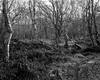 Hyons Wood (Jonathan Carr) Tags: tree woods ancientwoodland landscape rural northeast toyo45a black white bw 4x5 5x4 largeformat monochrome