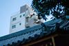 20170115-_DQH0055.jpg (ykgraph) Tags: sdquattroh sigma 50mmf14 foveon 東京 日本 tokyo japan sdquattro art