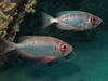 Big eyes (Lerotic) Tags: uw underwater egypt redsea scuba diving