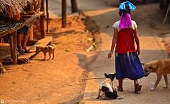 13-03-22 Thailandia (255) R01 (Nikobo3) Tags: asia thailandia maehongson ríopai mujeresjirafa selva rural poblados aldeas social nikon nikond800 nikon7020028vrii nikobo joségarcíacobo flickrtravelaward ngc culturas color people gentes