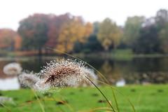 IMG_6612 (2) (skenda) Tags: hannover herbst maschpark morgentau