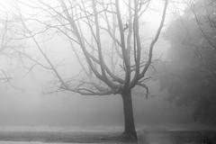 Inverno / Winter (Francisco (PortoPortugal)) Tags: 2642016 20150214fpbo0436ed pb nb bw monocrome valinhas árvores trees porto portugal portografiaassociaçãofotográficadoporto franciscooliveira