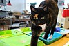 """IK KOM JE HELPEN!"" || ""I AM HERE TO HELP!"" (Anne-Miek Bibbe) Tags: canoneosm annemiekbibbe bibbe nederland 2016 cat gato chat katze gatto kat katten cats poes atelier workshop"