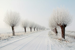 endless white... (^els^) Tags: wiinter alley snow white trees cold