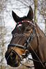 Croome & West Warwickshire Hunt at Harvington February 2016 (Country Shots Photography) Tags: 2016 byrdsretreat cwwh february foxhunt thelodge churchlench croome warwickshire harvington hunting riding horses hounds followers field charlie