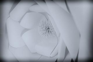 Paper Flower - HMM!