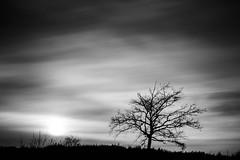 Hello Darkness (frank_w_aus_l) Tags: heather nature monochrome sw bw noiretblanc tree solitude sun haze sky longexposure nikon d800 tiltandshift pce halternamsee nordrheinwestfalen deutschland de
