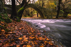 Last to fall (Alex Apostolopoulos) Tags: january vegetation autumn bridge flow leaves stream foliage cyprus sony sonya6000 ilce6000 samyang samyang12mmf20ncscs haidand1000 manfrottobefree