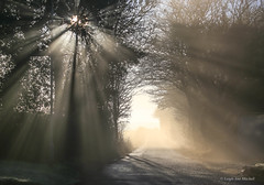 LET THERE BE LIGHT (Leigh-Ann Mitchell Photography) Tags: mist sun trees sunray scotland nature