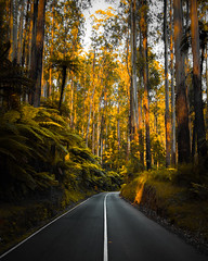 (lucidddreamin') Tags: ferntree fern forest emtyroad victoria australia green colours road