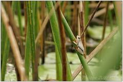 DSC08713PJ_XNV (http://phj.bookfoto.com/) Tags: botswana afrique okavango philippe jubeau delta
