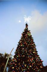 Tree at Young Circle (Stephen Hilton) Tags: canonetgiiiql17 35mm kodakportra400 longexposure