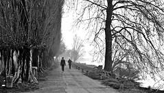 """Walking Along The Lake Of Mantua"" (giannipaoloziliani) Tags: mantua mantova italy unesco lago lake walk walking camminando lungolago città city nebbia fog biancoenero blackandwhite monocromatico monochrome lombardia perspective prospettiva prospettica people nikon nikond3200 nikonofficials nikoncamera nikonphotography nikonphoto nikonblackandwhitephotography pioppi alberi trees natura nature silence silenzio pace relax relaxing panorama landscape captures capturemoment mattino morning mantuacity flickr sentiero viale stradina ghiaia riva rivadellago luci lights blackandwhitephotography blackandwhitephoto focalpoint mist foschia street streetphotography streetblackandwhite streetphoto persone footing society italia tronchi fusti rami skyline cielo sky"
