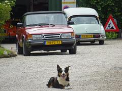 1987 SAAB 900 Cabrio T16 & 1974 Citroën D Special (peterolthof) Tags: peterolthof pbfz72 saab 900 hvxv75 citroën dspecial hoogkerk