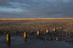Golden groynes (Ali's view) Tags: