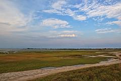 Galveston Island State Park (ov.black) Tags: statepark park galveston gulfofmexico island texas state tx wildlife marsh galvestonisland galvestontexas texasgulfcoast galvestontx galvestoncounty galvestonislandstatepark galvestoncountytexas galvestoncountytx