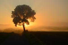 DSC_7120 Märchenhaft.... - Fabulously .... (baerli08ww) Tags: light mist tree colors sunrise germany landscape deutschland licht nebel natur landschaft sonnenaufgang baum farben rheinlandpfalz westerwald rhinelandpalatinate westerforest