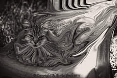 Here We Go Again (fishmonger45) Tags: cats photoshop hss greatphotographers ononesoftware crazygeniuses