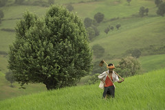 Farmer with tree, Myanmar (Salvatore Ferri) Tags: world voyage travel beauty landscape photography photo yahoo google flickr image photos earth images viajes national planet lonely fotografia discovery viaggi viaggio geographic gettyimages voyages mondo immagini scoperta