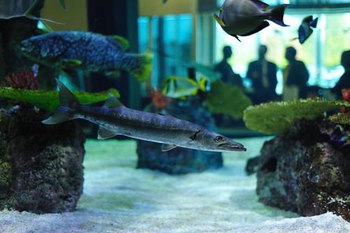 20,000 gal. SW Shark Exhibit - Corporate Office -  LYNY - 2