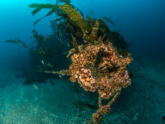 Midnight Hour Shipwreck, Catalina Island (kteich) Tags: california island catalina scuba diving midnighthourshipwreck