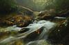 Autumn Rain (R. Keith Clontz) Tags: autumn mist rain northcarolina mountainbrook grandfathermountain boonefork mountainstream splashingwater colorfulleaves autumnleves mossyboulders rkeithclontz roanmountainphotography linvillegorgephotography grandfathermountinphotography