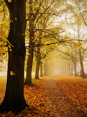 Autumn Trees - Cambridge (davepickettphotographer) Tags: city uk morning mist leaves misty fog foggy olympus autumnleaves gb autumnal cambridgeshire autumntrees autumnalleaves em1 thebacks autumnallight olympuscamera autumnalmorning autumnalweather
