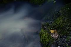 Fast running water (langfordm93) Tags: cold wet water leaves dark moss nikon focus shine fast damp d3200
