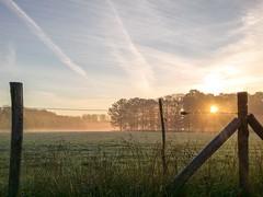 Morning Glory (Jan Moons) Tags: