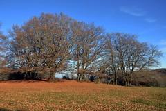 Autunno a Canfaito (giorgiorodano46) Tags: november italy autunno marche montesanvicino riservanaturale faggeta coloridellautunno canfaito novembre2015 giorgiorodano