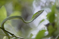 Me & My Home (Ramesh Adkoli) Tags: closeup wildlife muroor capturenx d800e