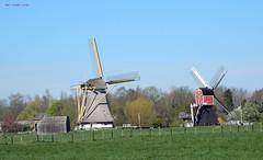 Westbroekse Molen (li.) en Buitenwegse molen Oud Zuilen (re.) (bcbvisser13) Tags: windmills bunker grassland weiland molens