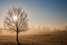 Sun Through the Branches (Baker_1000) Tags: 2016 bristol ashtoncourt sunrise dawn morning firstlight goldenhour frost winter nikon d90 nikond90 raw