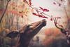 Smelling (Yannick Charifou Photography ©) Tags: nikon d700 afs35mm14g smell smelling odeur sentir feel ressentir parfum perfum newyork usa etatsunis musée museum biche doe arbre tree nose nez fleur flower plante charifou wide open aperture dof bokeh 14 forêt sauvage forest animal extérieur printemps spring