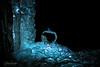 Lights From Below (Fredrik Lindedal) Tags: apple glassboll ice lights glow frozen nikon art photoart cold sweden vinter winter icedrops iceart glimmer blue light d7200 waterfall