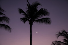 Moon over Aruba (ptmarctm ©) Tags: aruba beach sunset caribbean sea ocean palm palmtree tree sky beauty colors colorful amazing amazingcolor moon pretty nikon d90 night nightime nightphotography