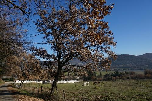 Tree 10-12-16