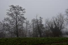 24/365 Trees ! (timmynomates2003) Tags: 24365 365