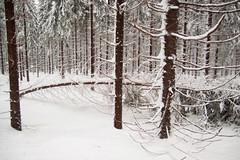 VKU durch einem Wintergewitter (Bernd März) Tags: baum bernd berndmärz bruch bäume eis erzgebirge graben lkw märz s260 schnee schneebruch schneeverwehungen vku verkehrschaos verwehungen winter 100610unwetteransprung