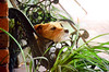 1/365 - Birthday Boy (purple_goat_83) Tags: dog jack russell terrier jackrussell puppy birthday alfie jrt