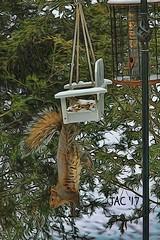 Stuck............. (smiles7) Tags: hss sunday squirrel sliderssunday