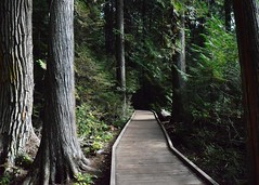 My Secret Place (savannah.whitney5) Tags: glacier glaciernationalpark ceder trail tunnel nature