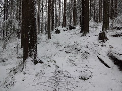 Snowy woods (mag3737) Tags: snow woods forest fromme mtfromme