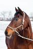 Amulette (NL - Follows back but read profile first!) Tags: horse paard amulette photography photographer winter snow sneeuw gemeenteoss netherlands nederland noordbrabant