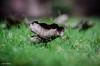 Leave the Leaf (BGDL) Tags: lightroomcc nikond7000 bgdl niftyfifty odc afsnikkor50mm118g garden grass leaf fromgroundlevel