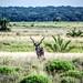 Kudu Bull - iSimangaliso Wetland Park, KwaZulu-Natal, South Africa