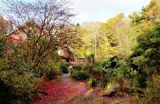 ma cabane au fond des bois