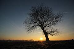 Brabantsche Biesbosch - Galeiwaard (merijnloeve) Tags: brabantsche biesbosch galeiwaard natuur noordbrabant landschap landscape dutch netherlands sunset sunrise zonsopkomst serene nature